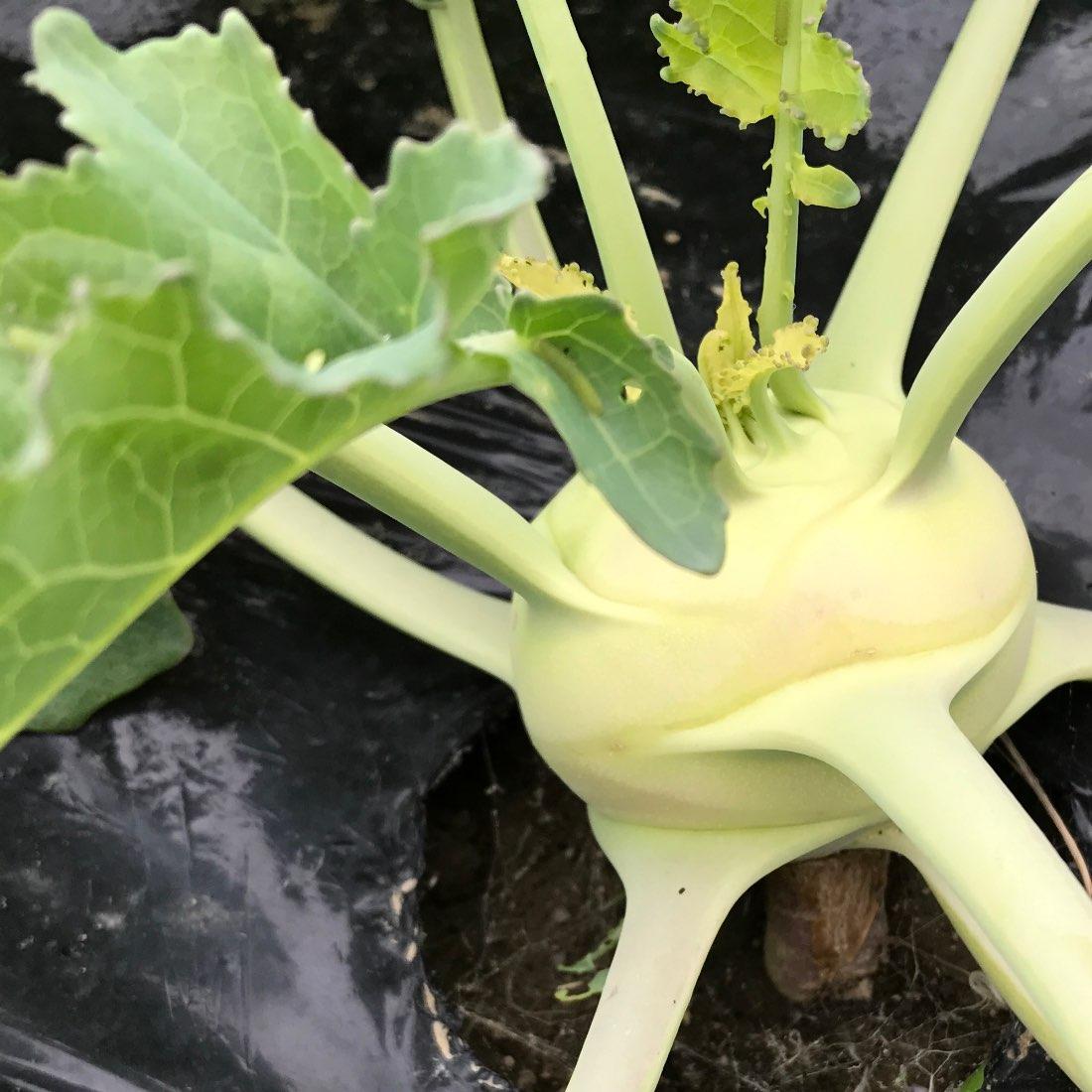 マルシェを開催 -ロックな野菜たち♪-