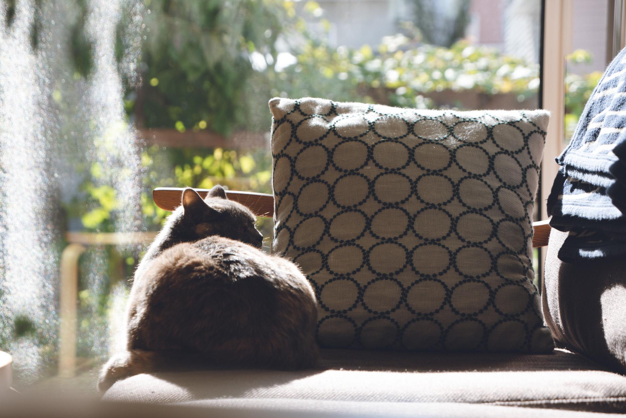 人懐っこい猫の写真