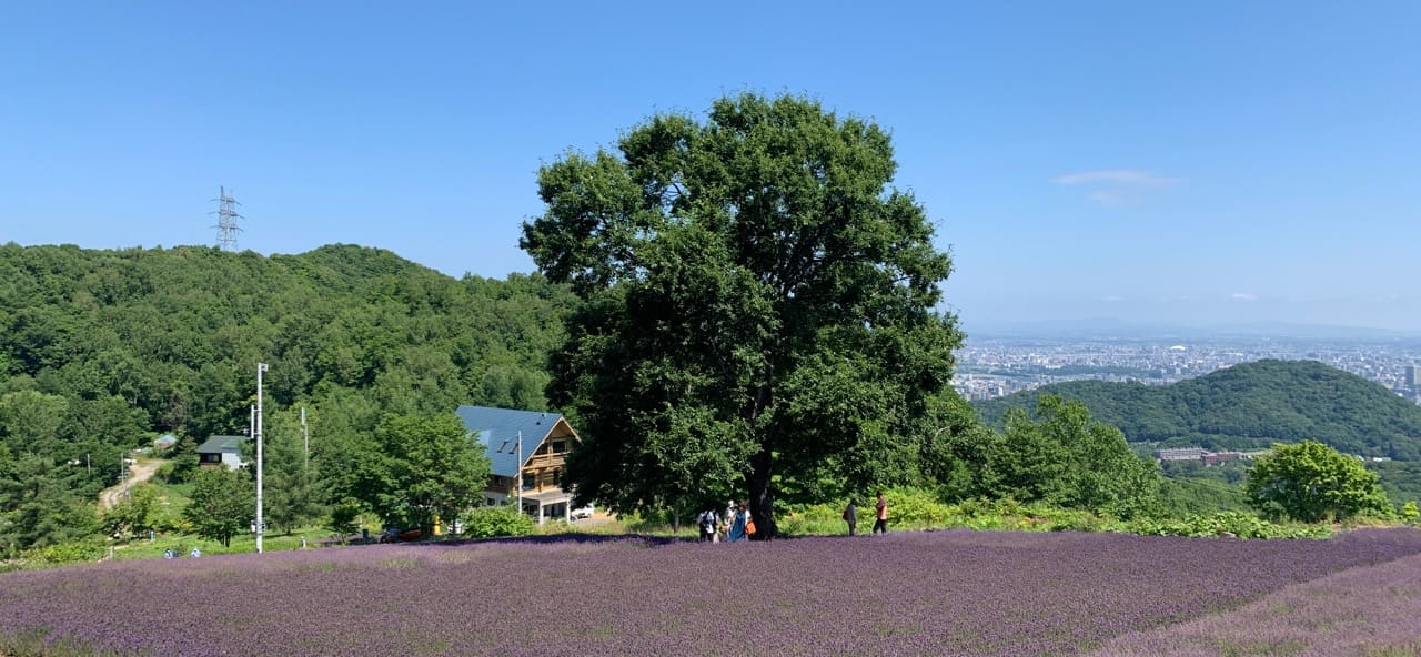 幌見峠のラベンダー園